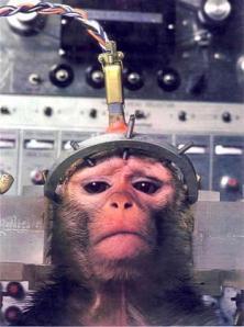 monkeytesting